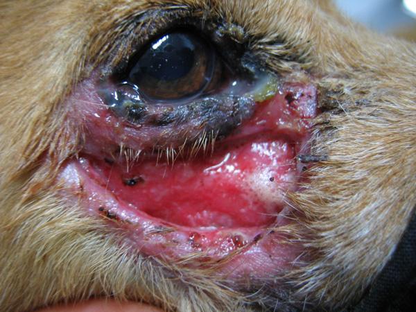 ozljede po koži psa i mačke