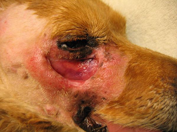 operacije pasa i mačaka