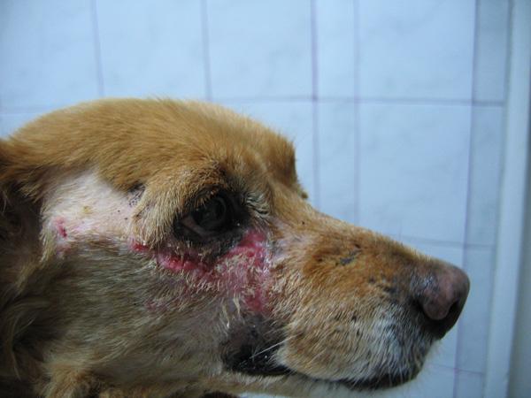 Rane i krastice po tijelu psa i mačke