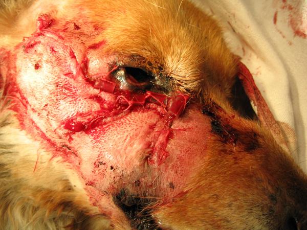 operacija na psu i mački